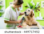 Stock photo woman getting golden retriever fur care at dog parlour 449717452