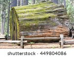 Log Of A Sequoia Trunk At...