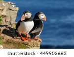 Puffin on the rocks at...