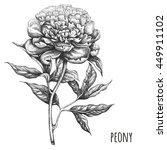 hand drawn peony. peony by ink. | Shutterstock . vector #449911102