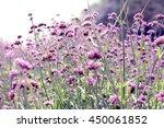 verbena garden with soft light... | Shutterstock . vector #450061852