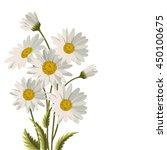 beautiful white daisies on...