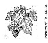 Beer Hop Illustration. Engraved ...