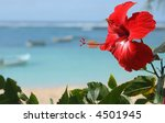 Red Hibiscus Flower By The Sea