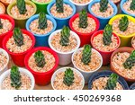 beautiful small cactus field | Shutterstock . vector #450269368