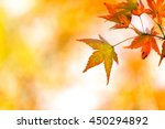autumn background with free... | Shutterstock . vector #450294892