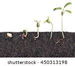 Growing Plants Bean Seed...