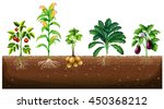 different kinds of plants... | Shutterstock .eps vector #450368212