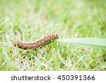 hairy caterpillar climbing a... | Shutterstock . vector #450391366