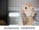 adorable baby rabbit in hutch | Shutterstock . vector #450392332