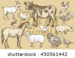 goat  cow  horse  sheep  pig ... | Shutterstock .eps vector #450561442