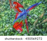 pair of scarlet macaws in tree... | Shutterstock . vector #450569272