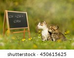 two kittens sitting in front of ... | Shutterstock . vector #450615625