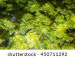 swamp algae. green algae...   Shutterstock . vector #450711292