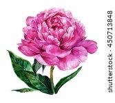 watercolor light pink peony... | Shutterstock . vector #450713848