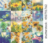 Collage Of The Summer Flowers