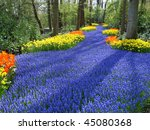 Lane Of Colorful Spring Flower...