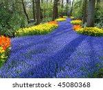 Lane Of Colorful Spring Flower...