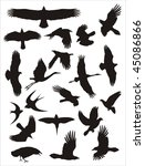 vector silhouettes of birds | Shutterstock .eps vector #45086866