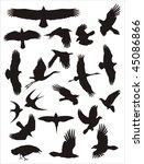 vector silhouettes of birds | Shutterstock .eps vector #45086866
