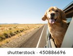 Stock photo golden retriever dog on a road trip 450886696
