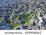 Vegetation In An Ancient Lava...