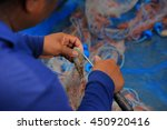 Shrimp In Fishing Nets