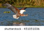 Fish Eagle Flying Low Over The...
