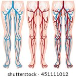 blood vessels in human legs... | Shutterstock .eps vector #451111012