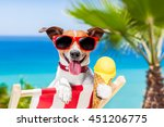 jack russell dog  on hammock at ... | Shutterstock . vector #451206775