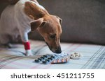 Sick Dog Jack Russell And...