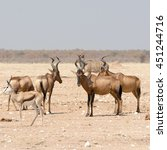 group of red hardebeest and... | Shutterstock . vector #451244716