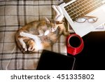Stock photo soft image sleeping baby cats and red cup coffee with laptop and tablet on black table 451335802