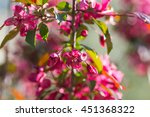 red blossom apple over nature... | Shutterstock . vector #451368322