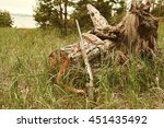 hunting items. hunting concept. ... | Shutterstock . vector #451435492