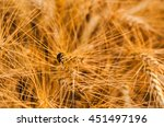close up bug climbing on the... | Shutterstock . vector #451497196