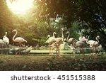 Flamingos In The Kuala Lumpur...