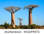 group of baobabs near morondava ... | Shutterstock . vector #451699072