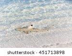 Blacktip reef shark (Carcharhinus melanopterus) in the shallow water. Maldives beach