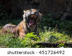 yawning while showing his teeth | Shutterstock . vector #451726492