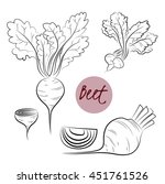 vector set of  hand drawn beet... | Shutterstock .eps vector #451761526