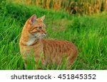 Red Cat In Green Grass Side View