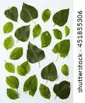 assorted tree leaves on a white ...   Shutterstock . vector #451855306