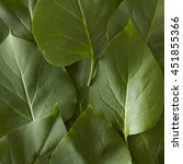 a close up of green leaves... | Shutterstock . vector #451855366