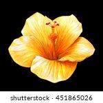 hibiscus yellow on black... | Shutterstock . vector #451865026