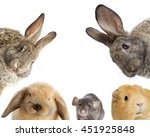 Stock photo rodents set looking 451925848