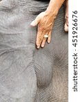 Small photo of temporal ducts, elephants in musth discharge a thick tar-like secretion called temporin from the temporal ducts on the sides of the head.
