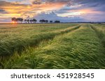 Wheat Field With Tractor Track...
