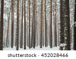 Snow Covered Pine Tree Trunks...