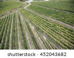 aerial shot of vines in a... | Shutterstock . vector #452043682